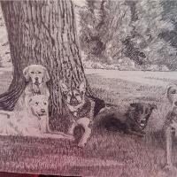 5 Dogs Chilling Under A Tree