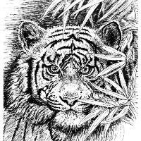 Tiger - King Of The Jungle