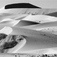 Sand Dune Sculptures