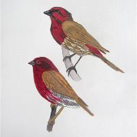 House Finch And Purple Finch