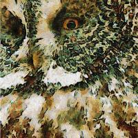 The Glaucus Owl
