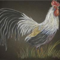 Chicken On Black Paper