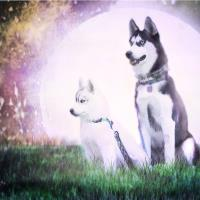 Huskies And The Moon