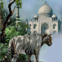 White Tiger Guardien Of The Taj Mahal