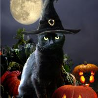 Witchy Halloween Kitty With Pumpkins