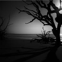 Driftwood Dreams (B&W)