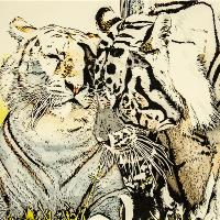 Affection Between Tigers