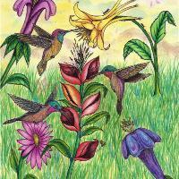 The Beautiful Hummingbird Paradise