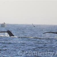 Two Whale Tails