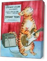 Stray Tom As Canvas