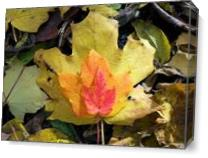 Autumn Leaves As Canvas