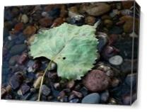 Leaf In Water As Canvas