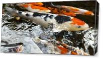 Koi As A Watercolor Painting As Canvas