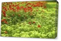 Poppyflower V As Canvas