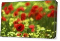 Poppyflower VI As Canvas