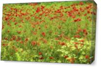 Poppyflower VII As Canvas