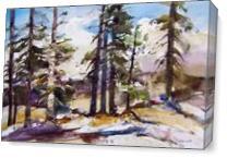 Sierra Trees As Canvas
