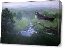 Red Tailed Hawk As Canvas