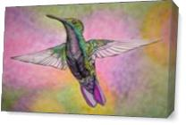 Little Hummingbird As Canvas