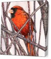Red Cardinal As Canvas