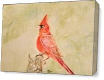 Cardinal As Canvas