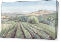 Bartholemew Vineyards As Canvas