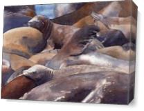 Pier 39 Sunning Sea Lions As Canvas