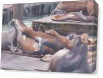Sea Lions On San Francisco Docks As Canvas