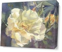 Yellow Rose Buds As Canvas