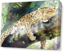 Big Cat Rescue Leopard As Canvas