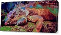 Iguana Sleep As Canvas