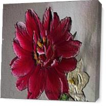 Lisas Red Flower As Canvas