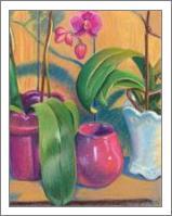 Orchids - No-Wrap