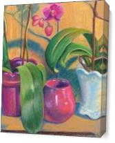 Orchids As Canvas