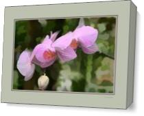 Orchid With Digital Mat As Canvas