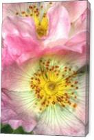 Fine Art Photograph Of Some Pink Wild Rose Flowers - Gallery Wrap