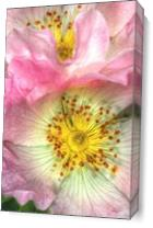 Fine Art Photograph Of Some Pink Wild Rose Flowers As Canvas