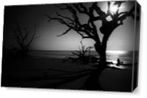 Driftwood Dreams (B&W) As Canvas