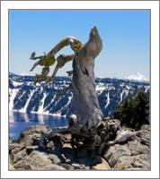 Crater Lake_ Little Bird On Dry 3 - No-Wrap