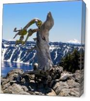 Crater Lake_ Little Bird On Dry 3 As Canvas