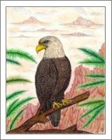 Eagle Of Freedom - No-Wrap