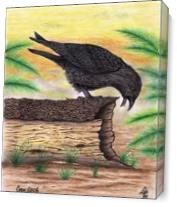 The Curious Crow In Full Color Mixed Media Drawing As Canvas