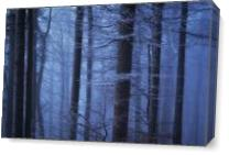 Misty Forest As Canvas