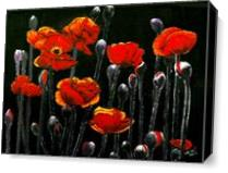 The Red Poppy As Canvas