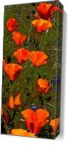 Poppies In Line As Canvas