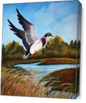 Bird As Canvas
