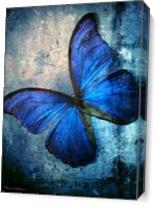 Butterfly As Canvas