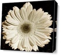 Gerbera Daisy As Canvas