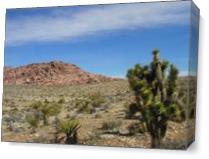 Death Valley Cactus As Canvas