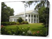 Orton Plantation As Canvas